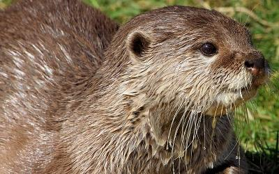 Internationale Dag van de Otter